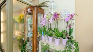 fiorentinos flowers zante zakynthos
